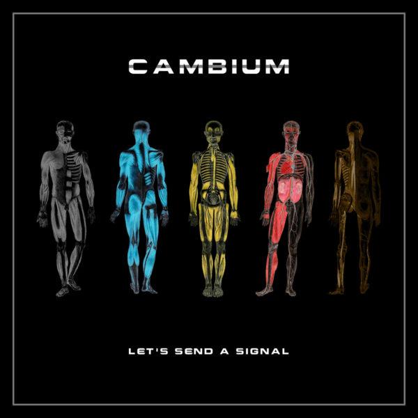 cambium_art