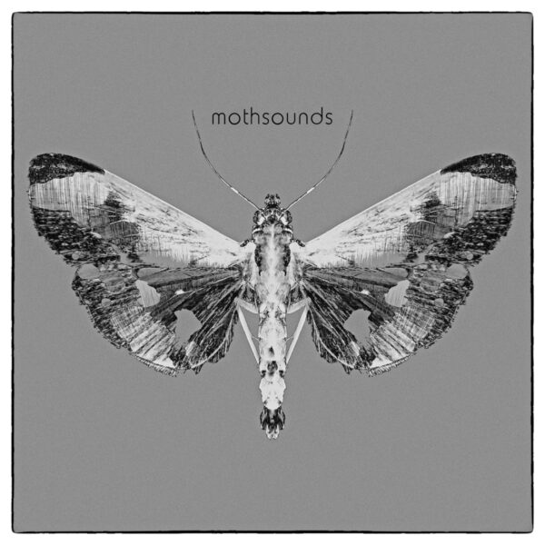 Mothsounds Cover Art
